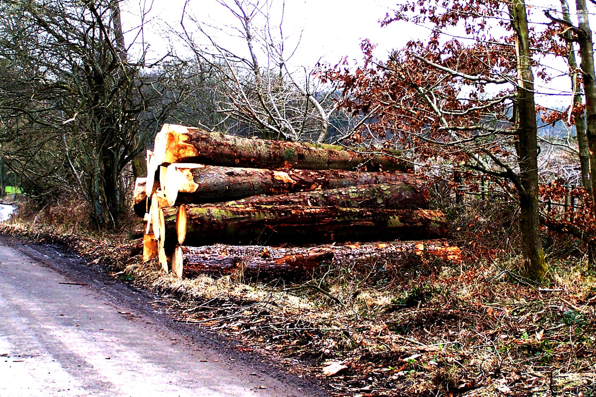 broomhead-wood-cycling